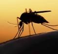 Febre amarela: Brasil registra 394 mortes e 1257 casos nos últimos dez meses